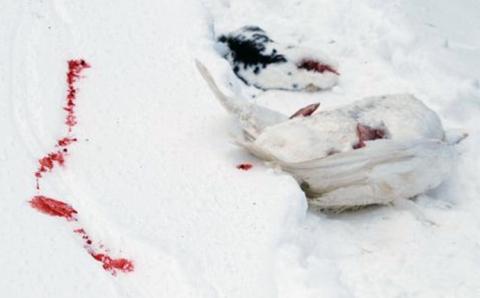 Blood Trail Tells the Tale